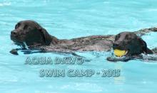 Aqua Dawg Camps